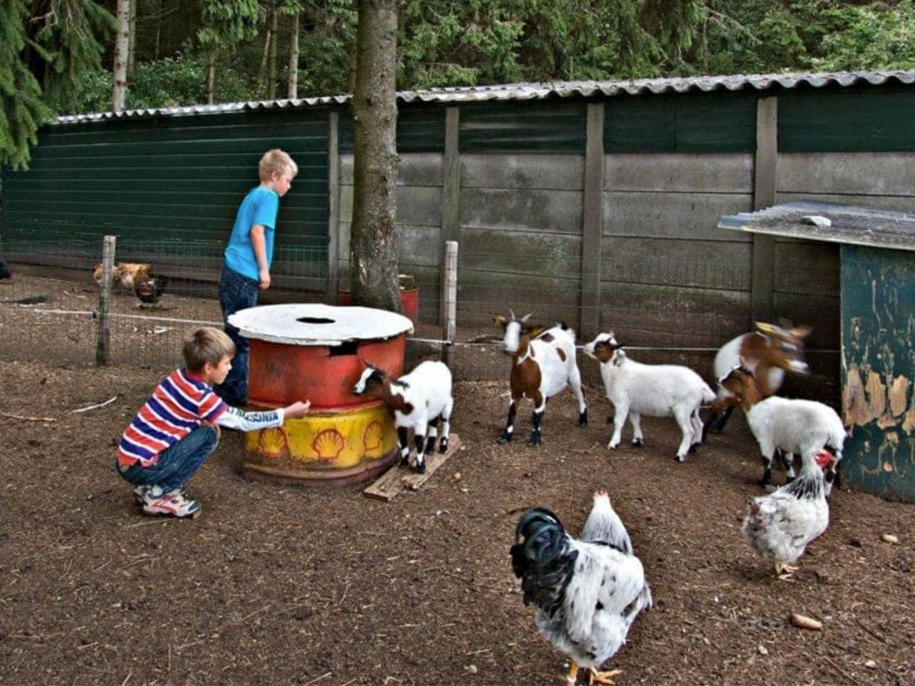 Kamperen bij de boer 25 - camping de prinsenhoeve